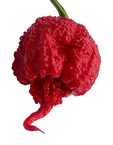 World's hottest peppers