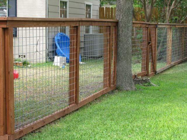 fence your dog